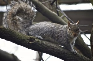500 Things to Love about Penn State: #500 Squirrels